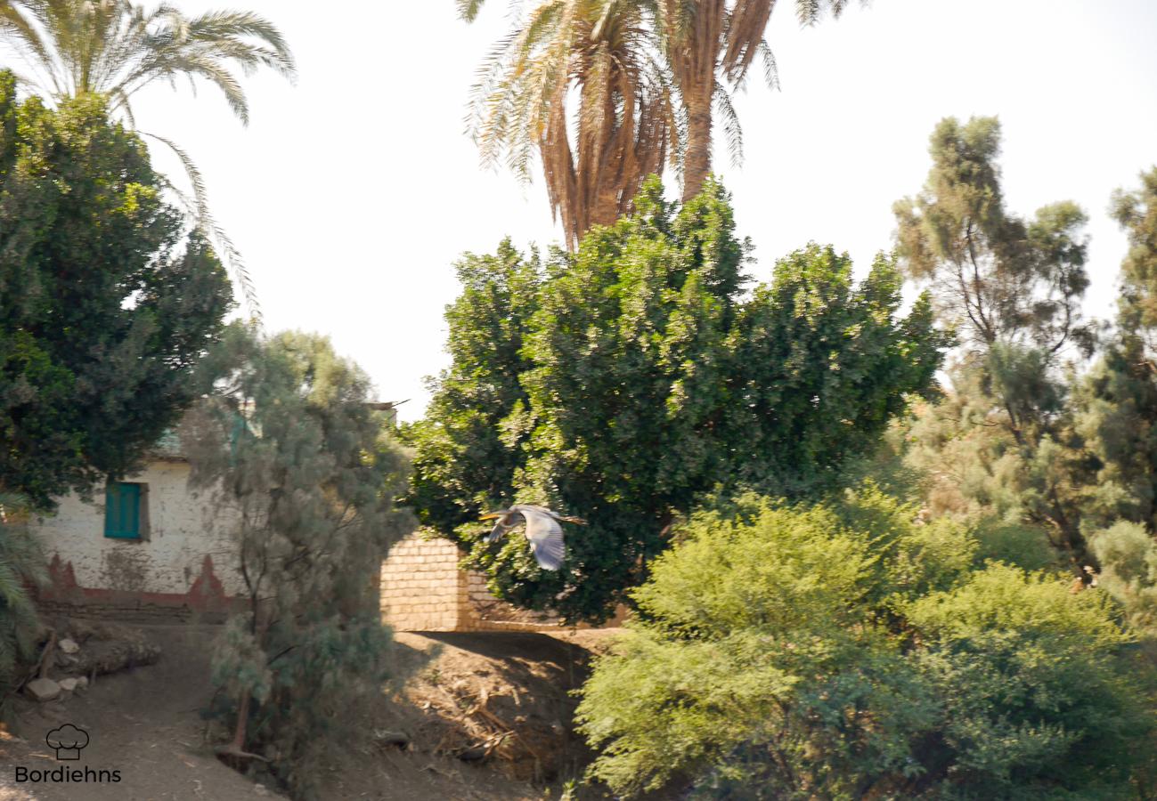 Luxor-114.jpg