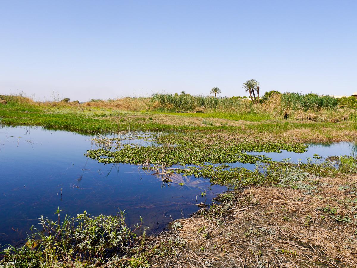 Luxor-118.jpg