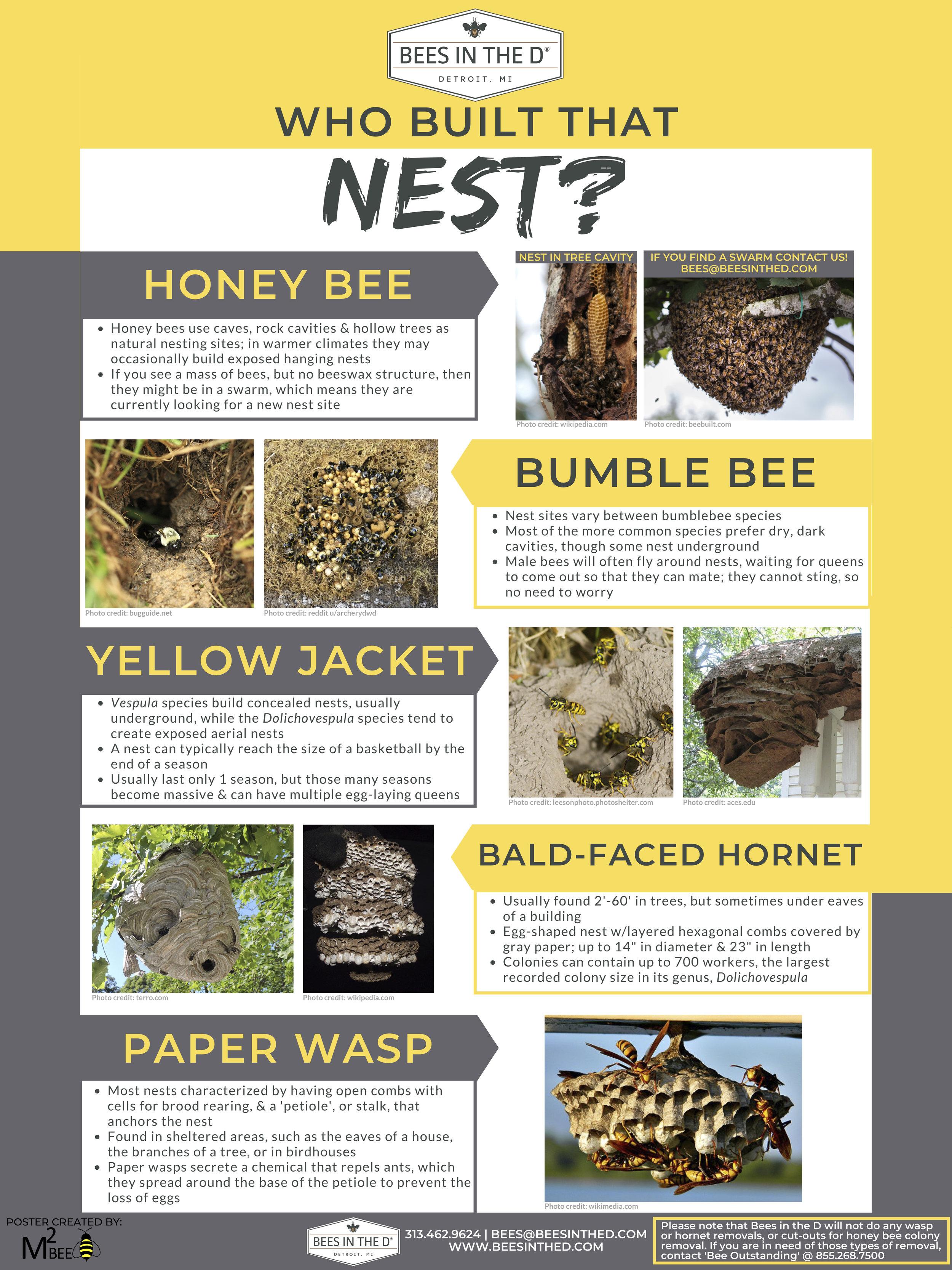 whose nest.jpg
