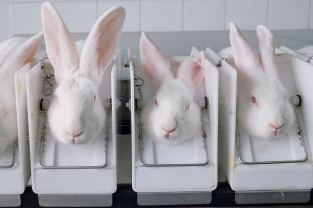 Animal-testing.jpg