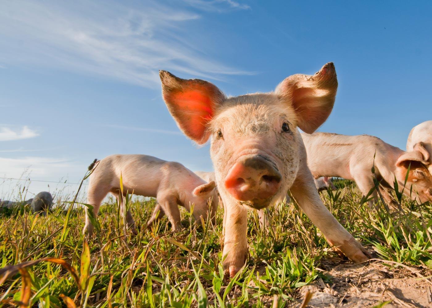 BACKGROUND-Animal-Welfare.jpg