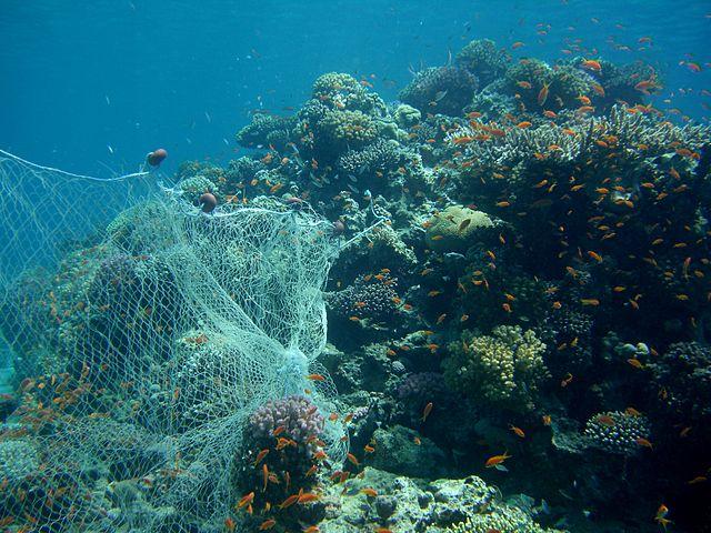 640px-CIMG2733_Fishing_Net_On_Reef_(2692835363).jpg