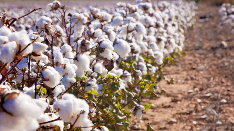 Organic Cotton is just one way that People Tree shows they care for the environment