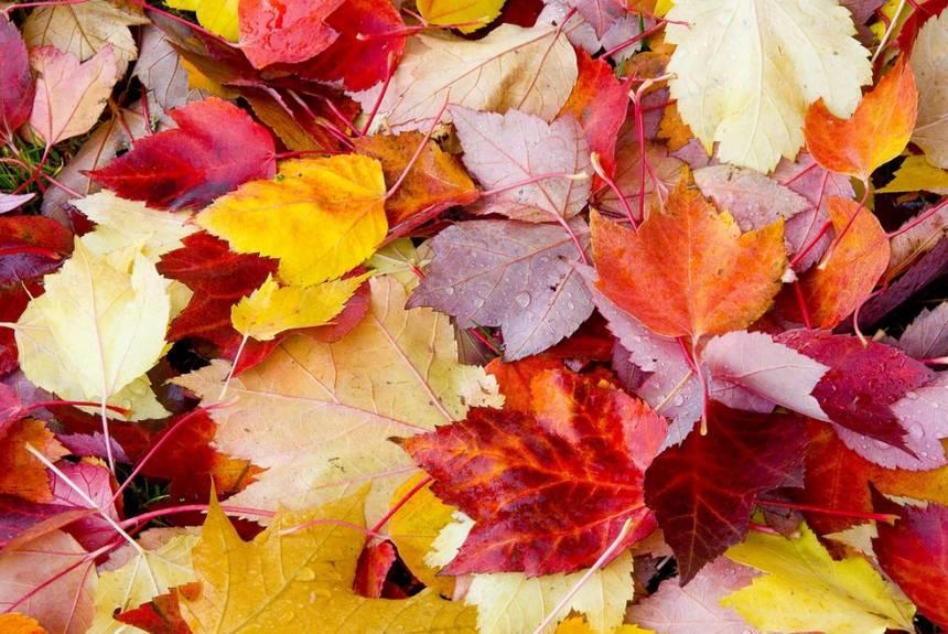 fallen-leaves.jpg.860x0_q70_crop-scale.jpg