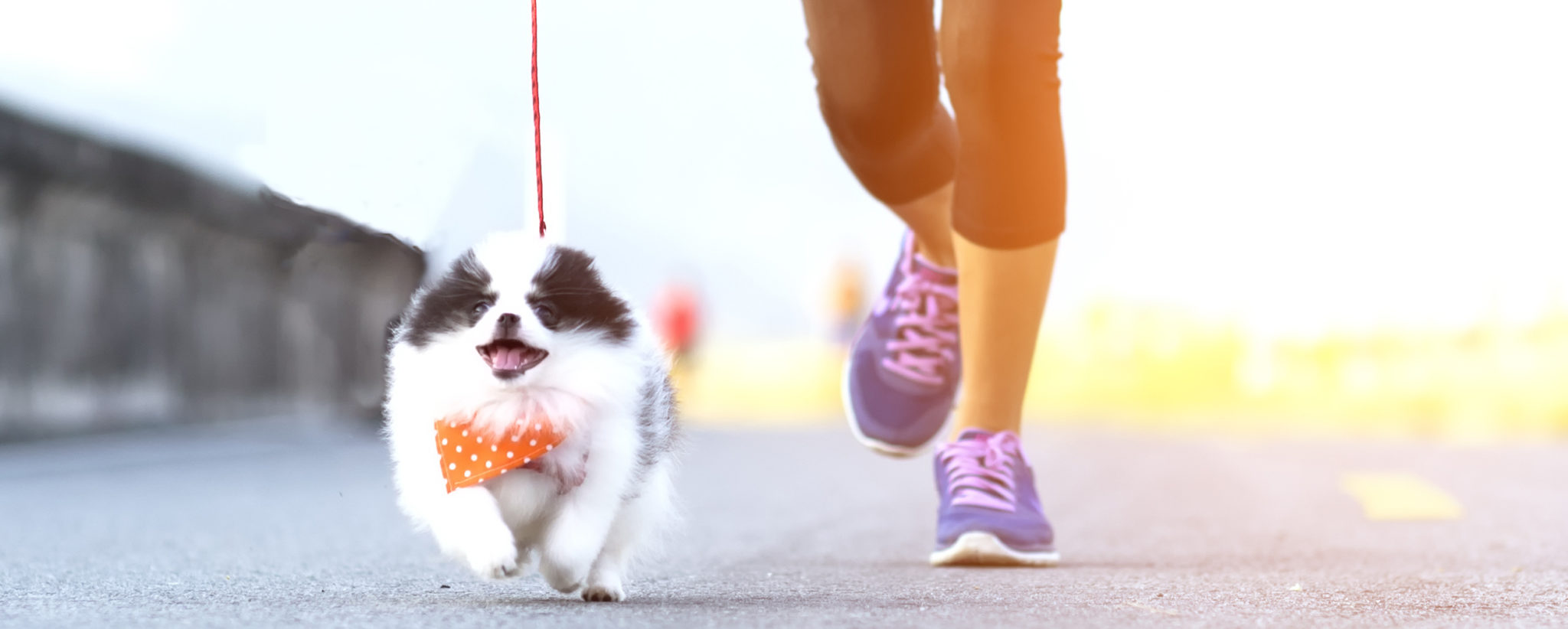 running-with-your-dog.jpg