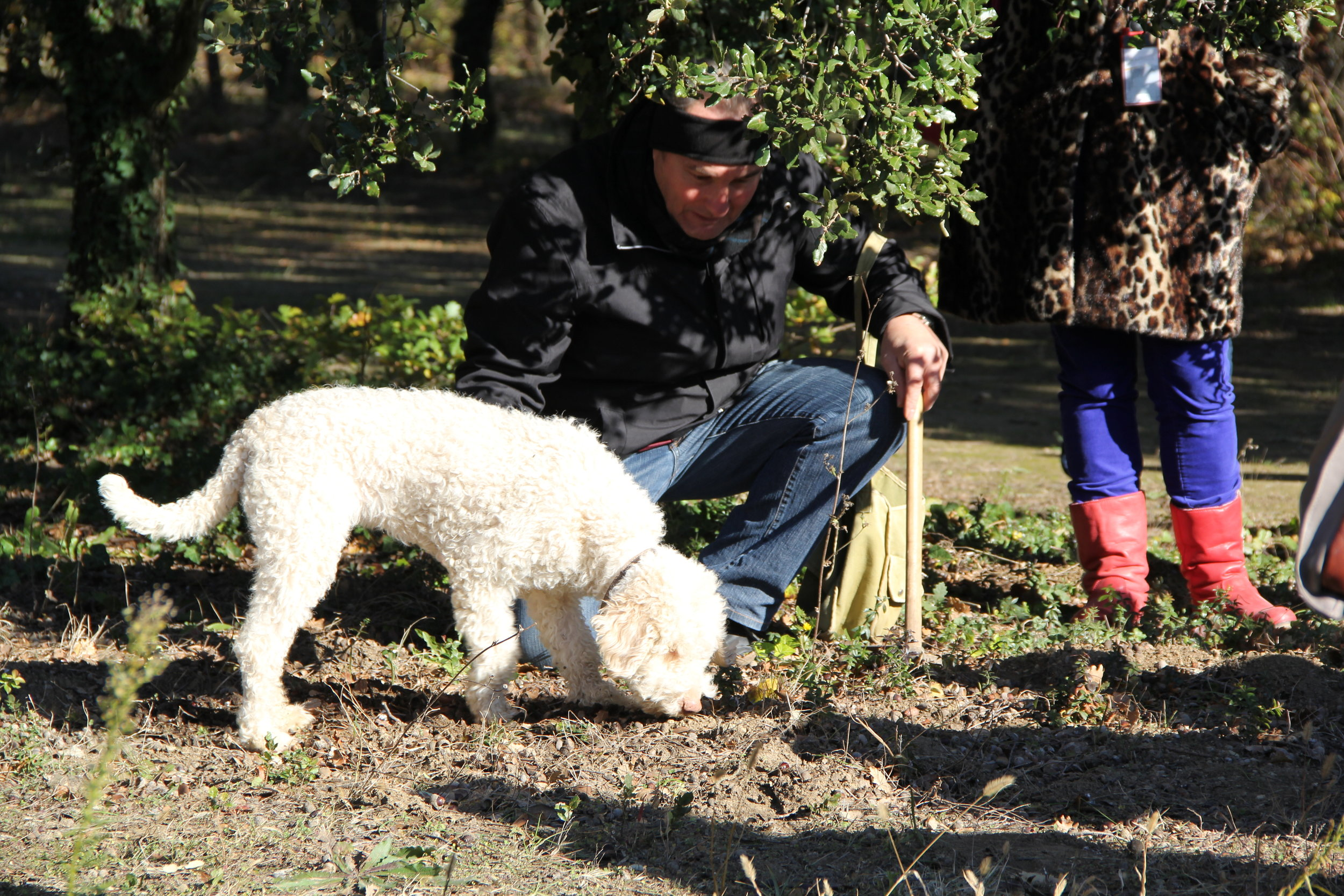 Hunting for Truffles in Provence—such a cool tour !