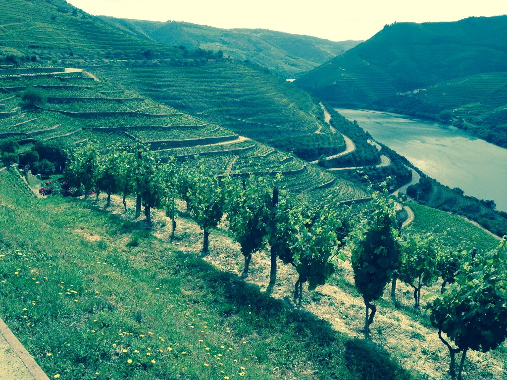 Some of the vineyards on the Douro River. The photo was taken by our clients the Howards on their Douro Cruise.