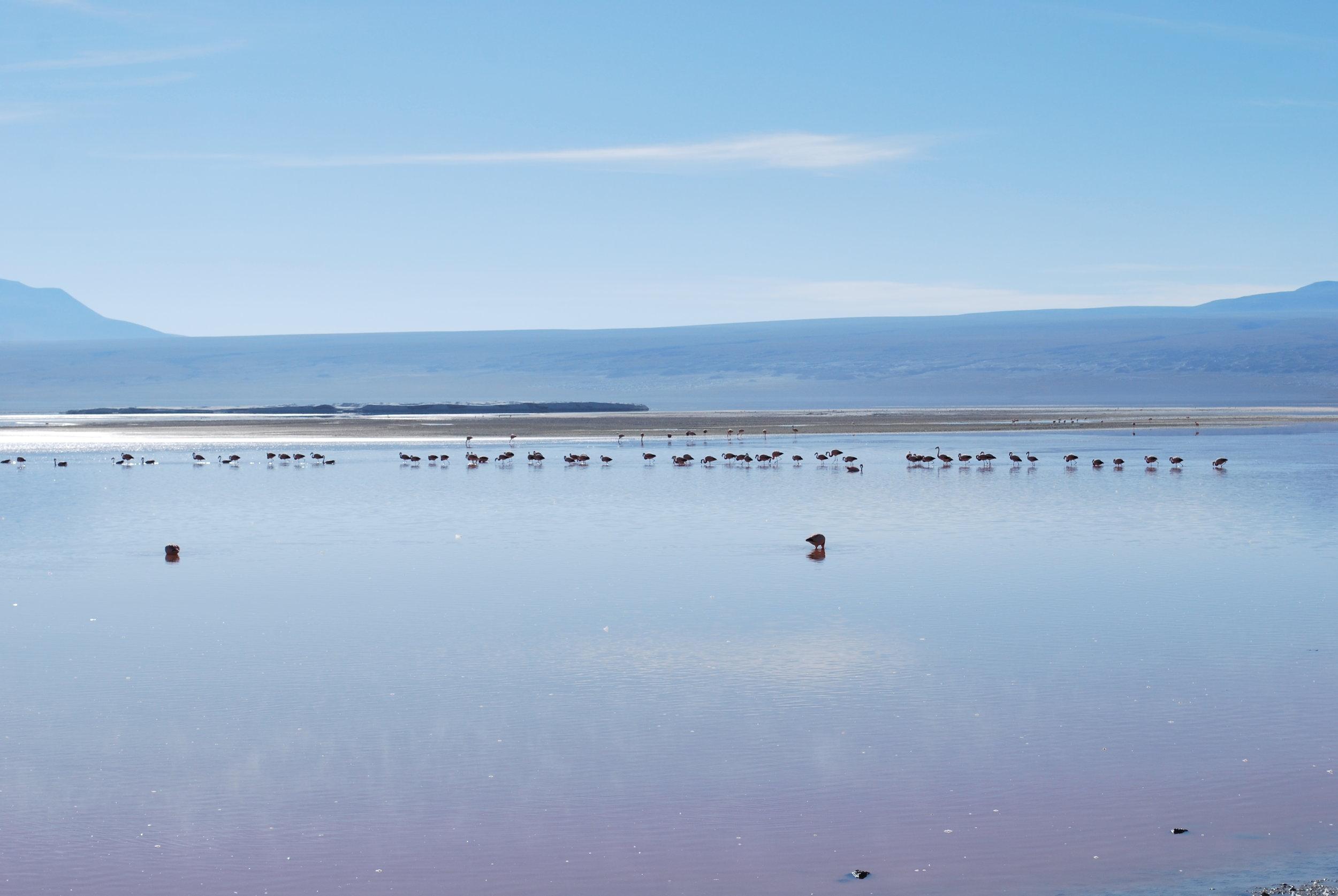 Suomesta kannattaa lähteä esim. silloin, kun voi päätyä tänne. (Atacaman aavikon suolalaguuneilla, Bolivia 2016)