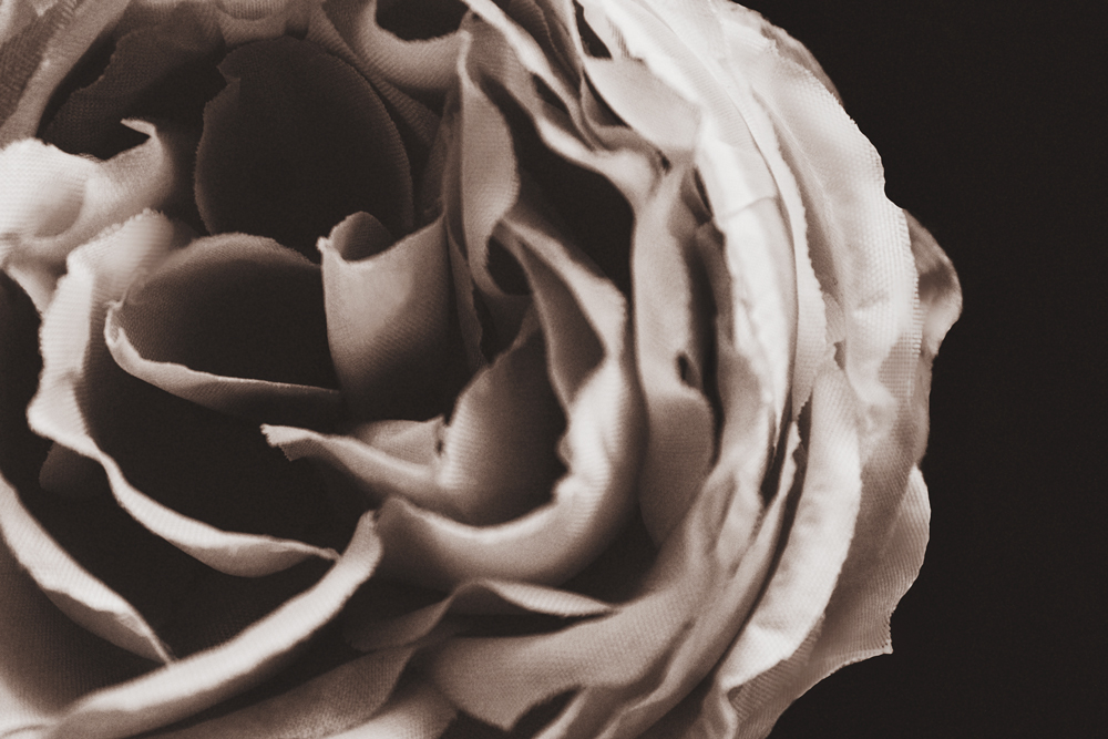 black_and_white_sepia_rose_photograph.jpg