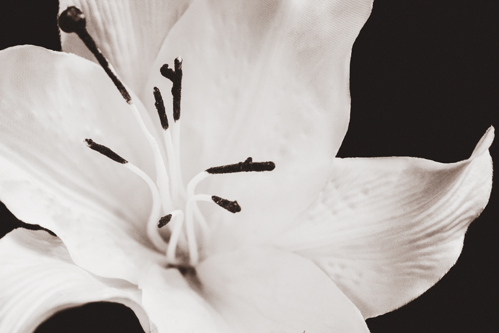 black-and-white-sepia-lily-photograph.jpg