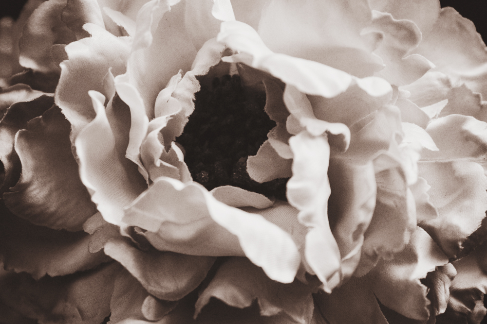 black-and-white-sepia-flower-photograph.jpg
