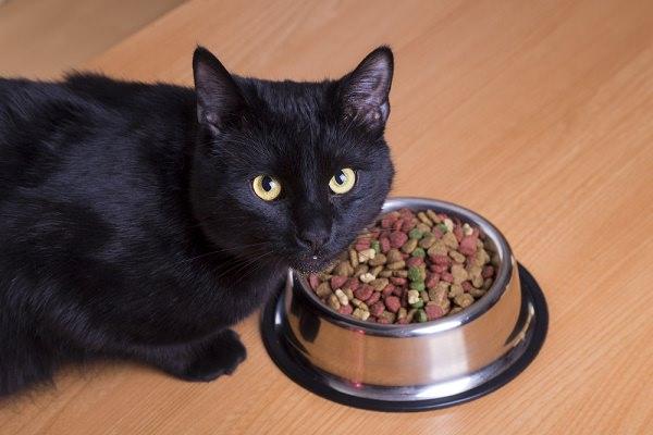 Cat Eating.jpg