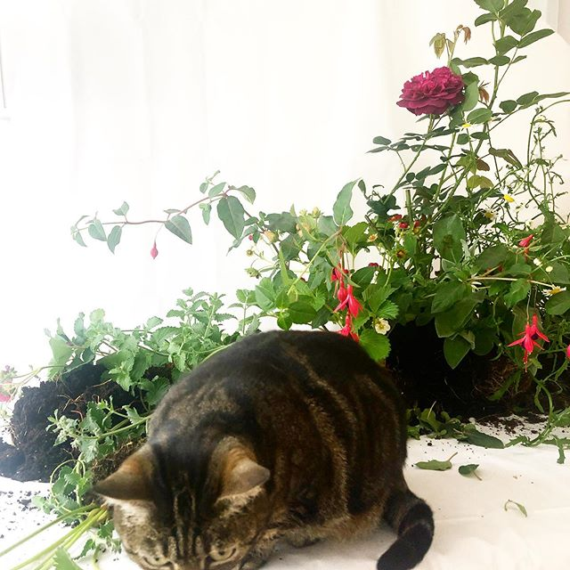 When you have catmint in the arrangement! 😺😻😺 #plants #tabletopgardens #flowers #workingfromhome #londonflorist #garden #stilllife #furandearth