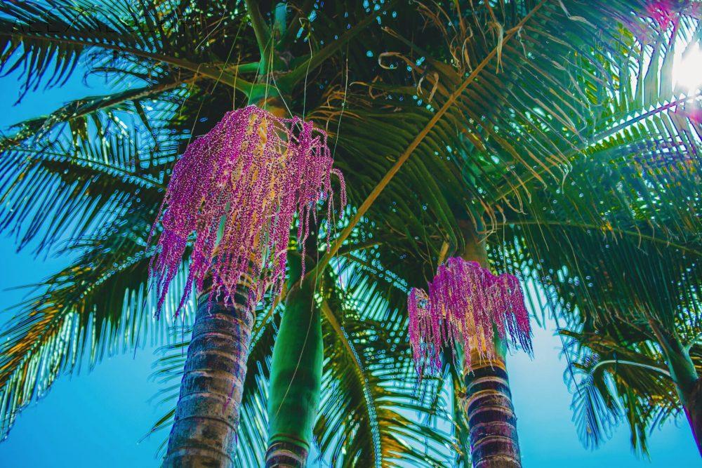 alberti-palms-1-e1482898774637.jpg