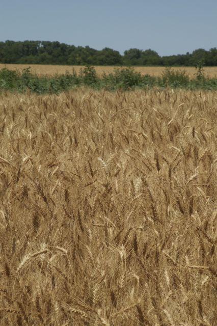 2012-Kansas-DSC_0102.jpg