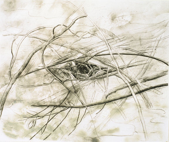 """(W)hole, 40"""" x 50"""", charcoal and spray paint on paper, 1997"""