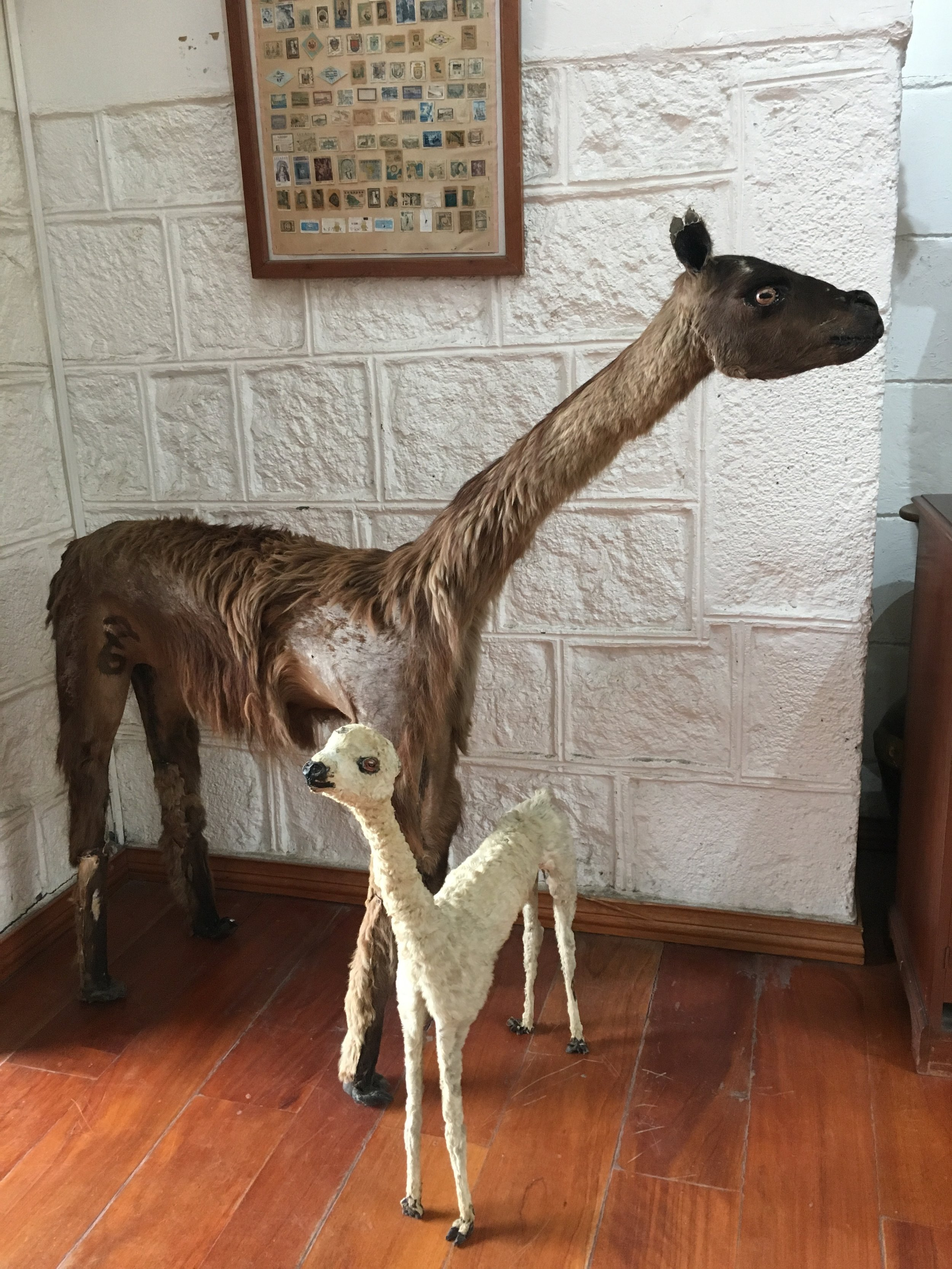 Just a glimpse of the strangest taxidermy ever. (But really, isn't all taxidermy strange?)