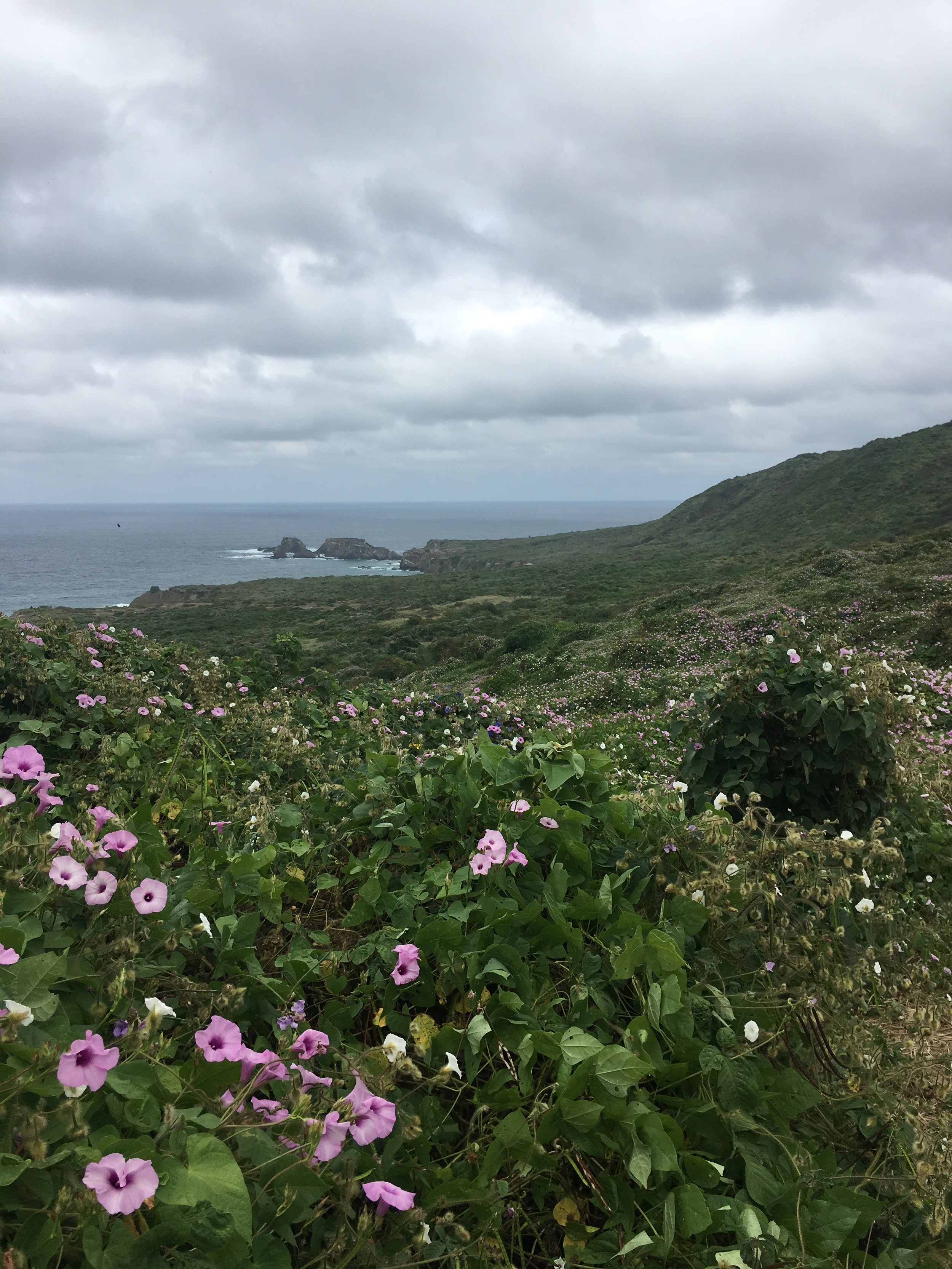 The scenery on this island was absolutely breathtaking!