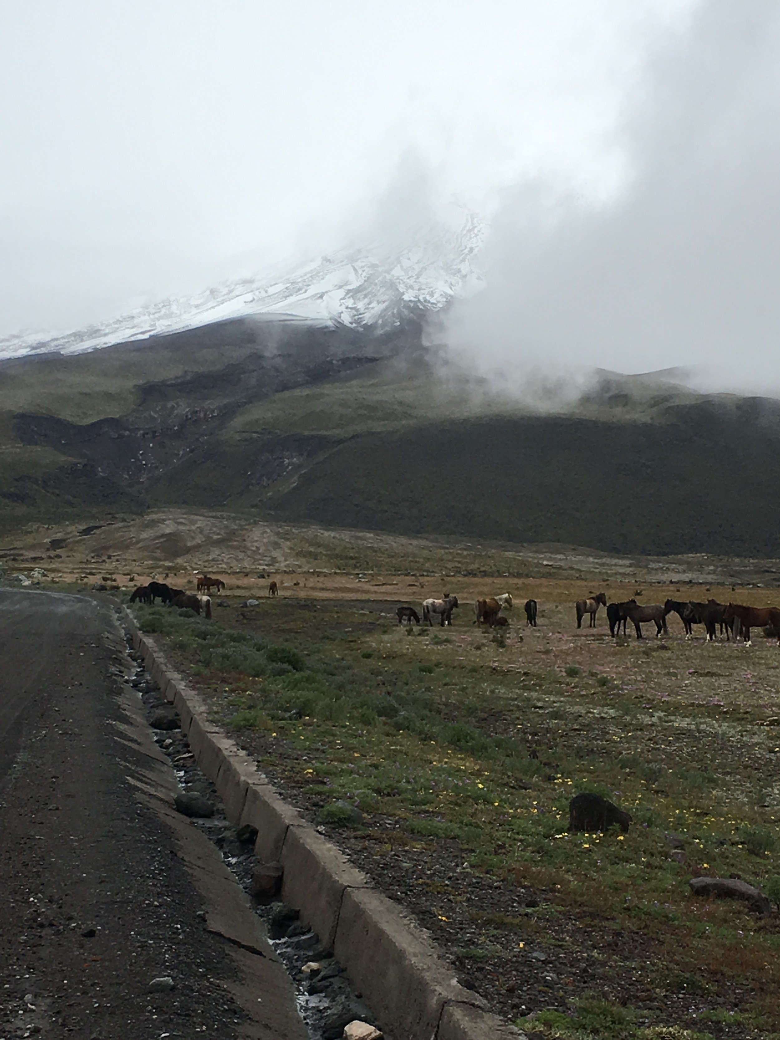 The view during our drive to the parking lot. We were hoping for a clear day but we were lucky to be able to at least see some of Cotopaxi. Those are also wild horses that live in the national park.
