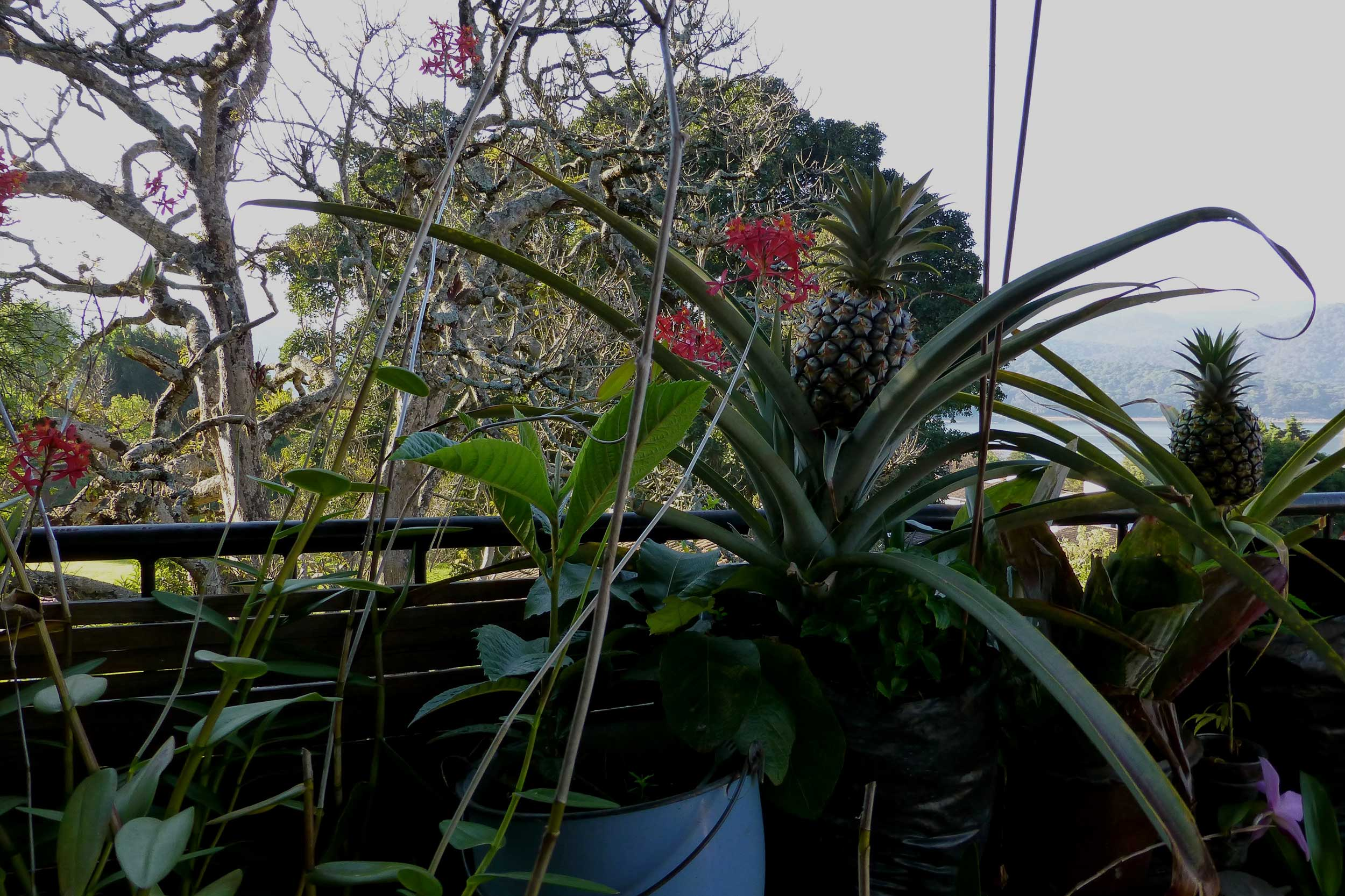 Paraglide-New-England-Trips-Valle-de-Bravo-Mexico-Gallery-House-Plants.jpg