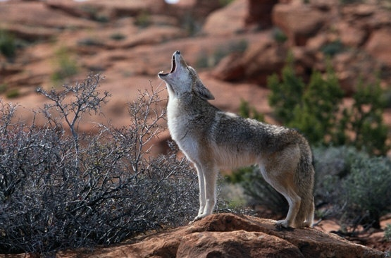 Careful use of the groundwater assures Arizona fauna and flora won't disappear.