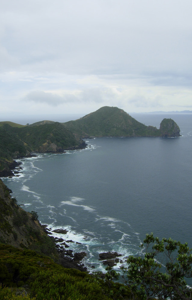 Port Jackson is at the northern tip of the Coromandel Peninsula.