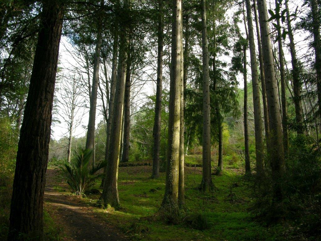 Eastwoodhill - New Zealand's national arboretum could play a role in preserving species threatened by climate change.