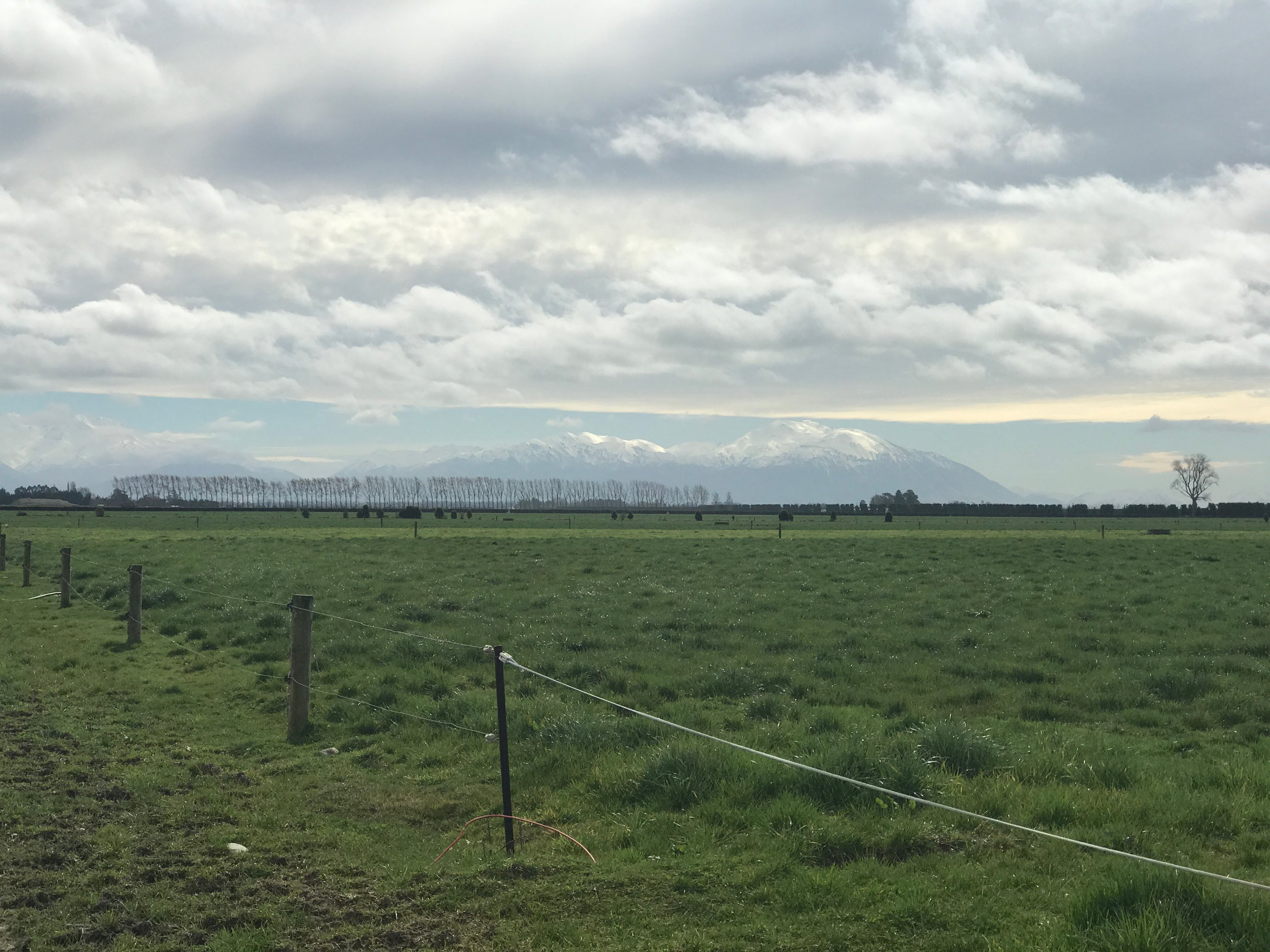 A South Canterbury scene - with the Southern Alps in the background.