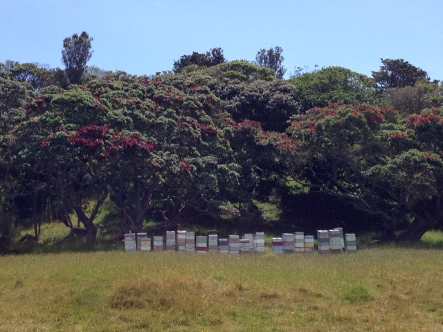 The best places for hives are in sunny yet sheltered areas.
