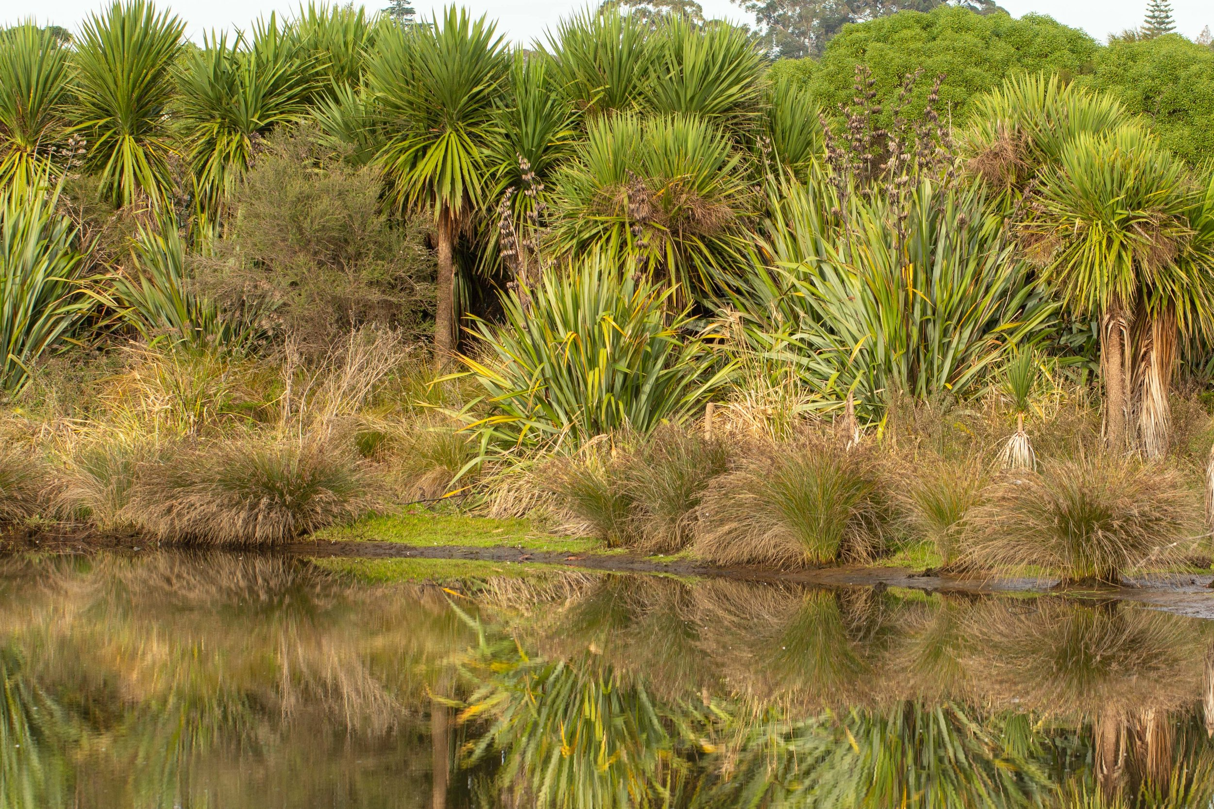 The Pukehina project involves a major scale land use change. Photo credit - Leigh Nicholas.