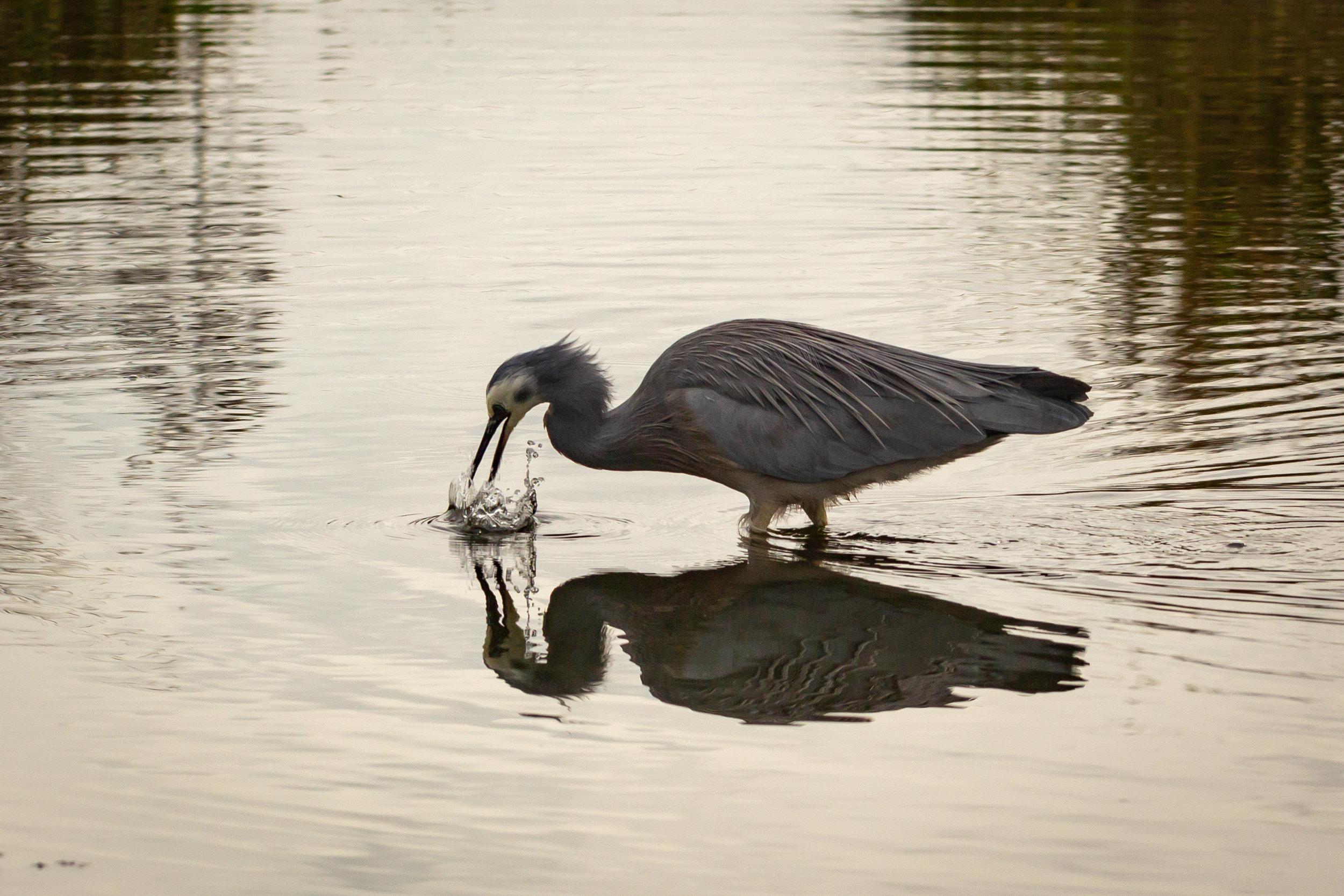 Pukehina Eco Village would create 35 ha of lake and 100 ha of wetlands. Photo credit - Leigh Nicholas.