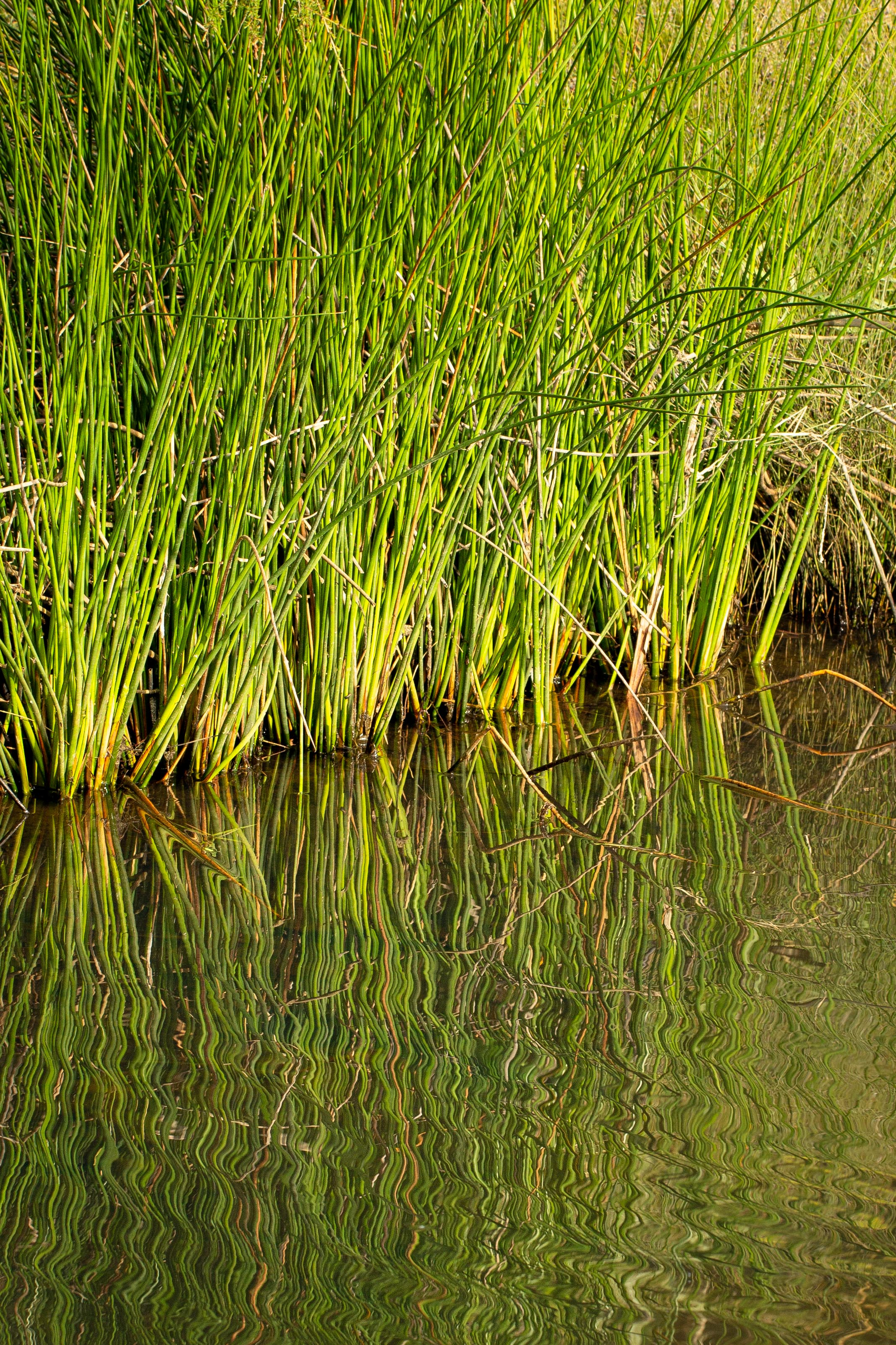 The Bay of Plenty is down to less than three percent of the original freshwater wetland habitat. Photo credit - Leigh Nicholas.