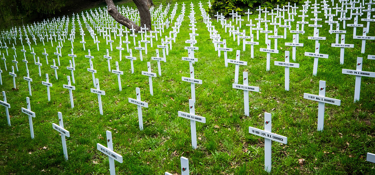The Wellington Field of Remembrance at the Botanic Gardens. Image credit www.fieldsofremembrance.org.nz