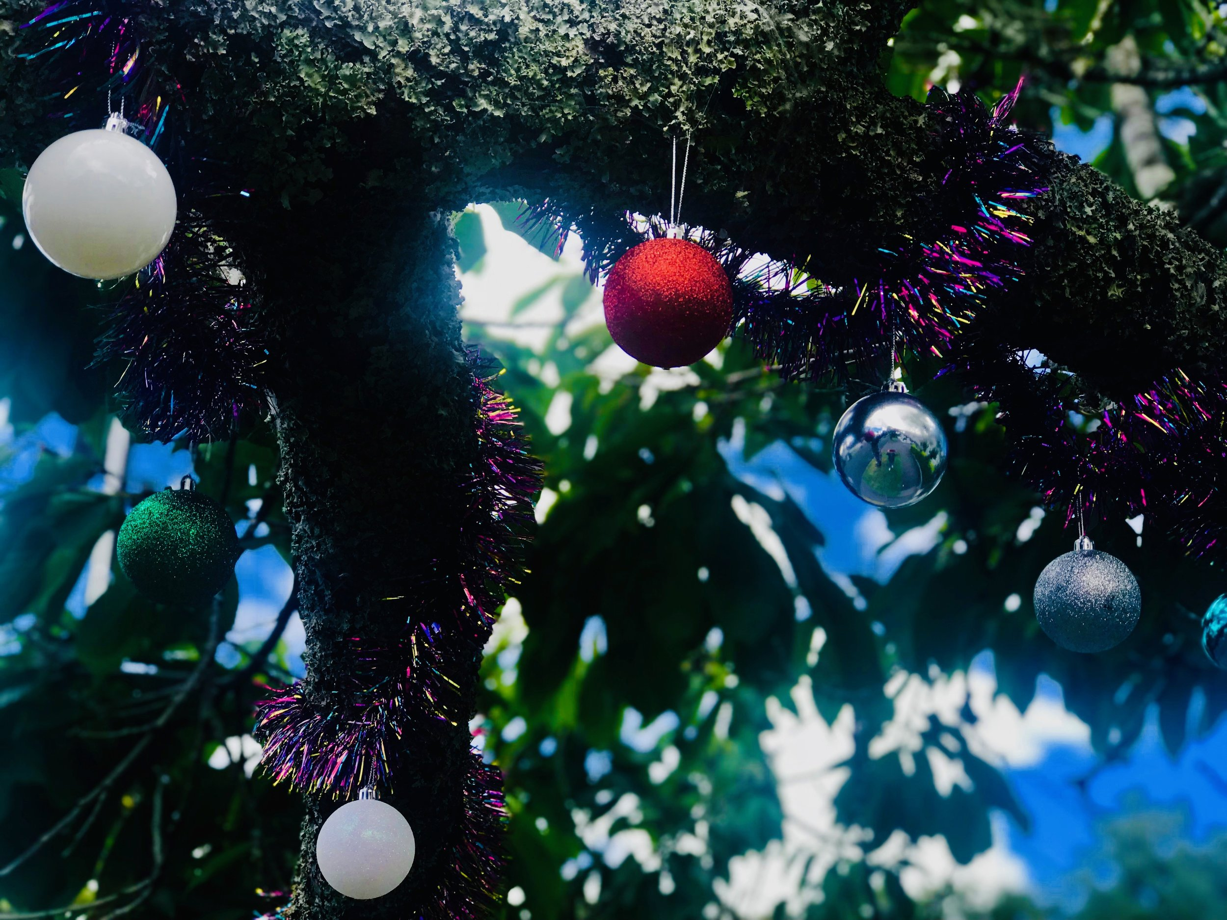 This Christmas tree is the same one we featured in our final post last year - it's street side in Auckland's Herne Bay and is decorated every festive season by the family in the house behind it.