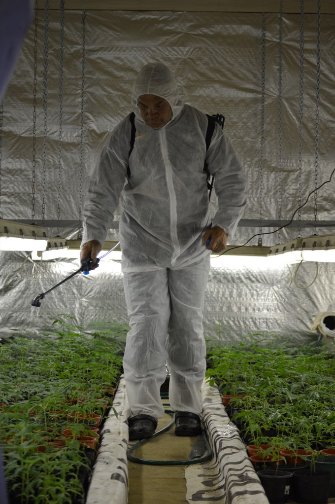 Manu Caddie believes farmers on the East Coast are open to the idea of cannabis as a crop.