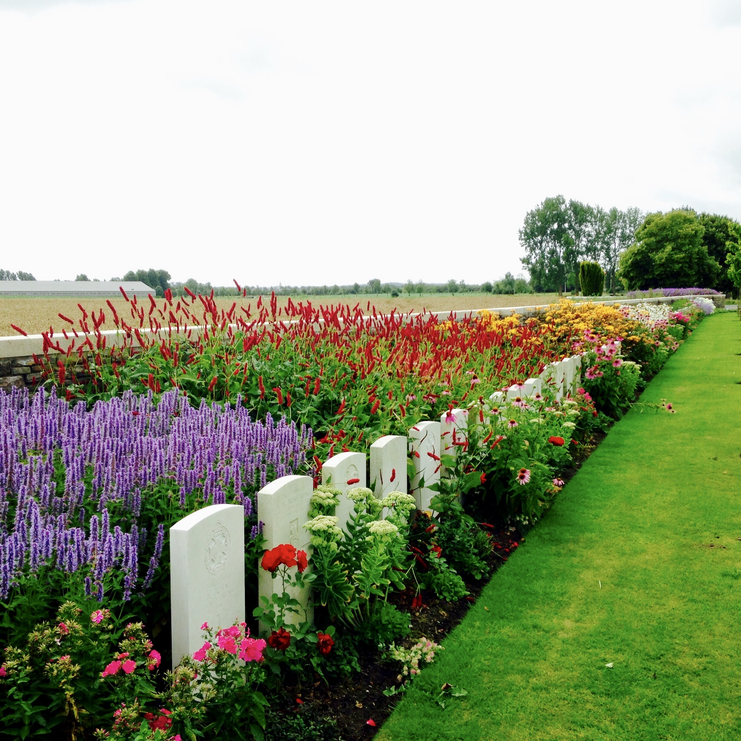 Forli War Cemetery, Italy. Photo credit: Commonwealth War Graves Commission