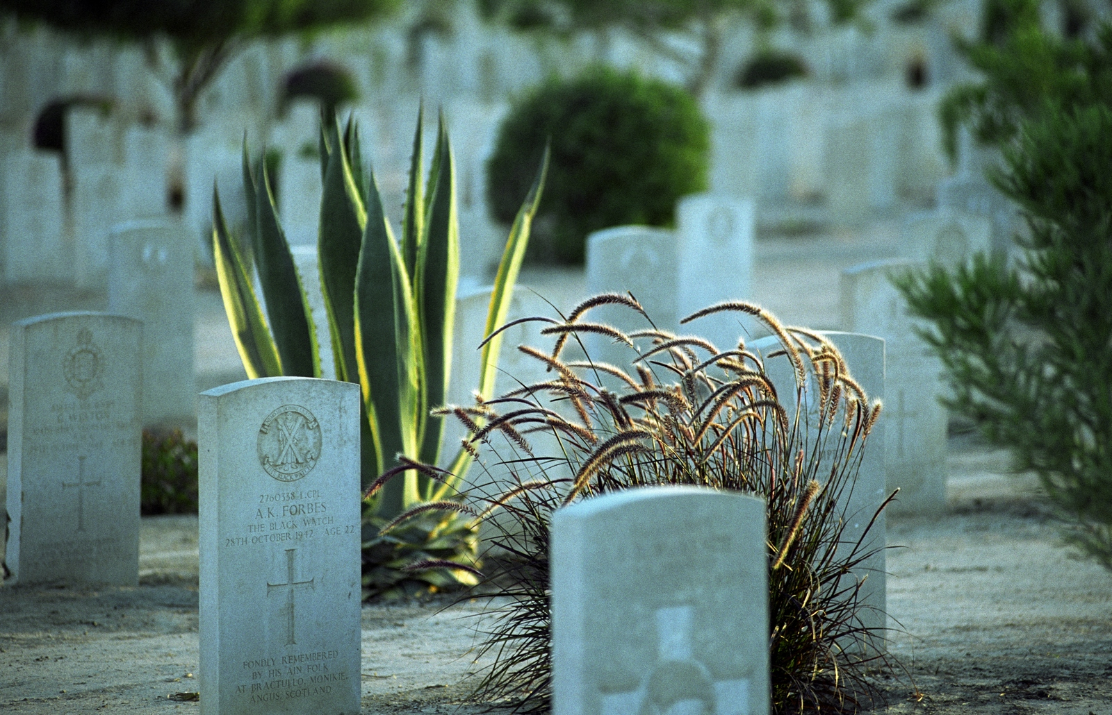El Alamein War Cemetery, Egypt. Photo credit: Commonwealth War Graves Commission
