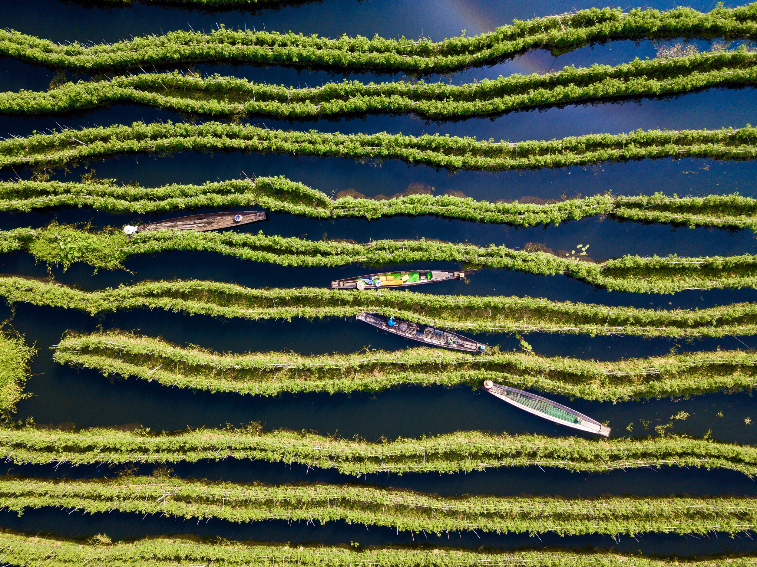 Floating gardens, Granollers, Spain. Photo: Carles Alonson/AGORA images