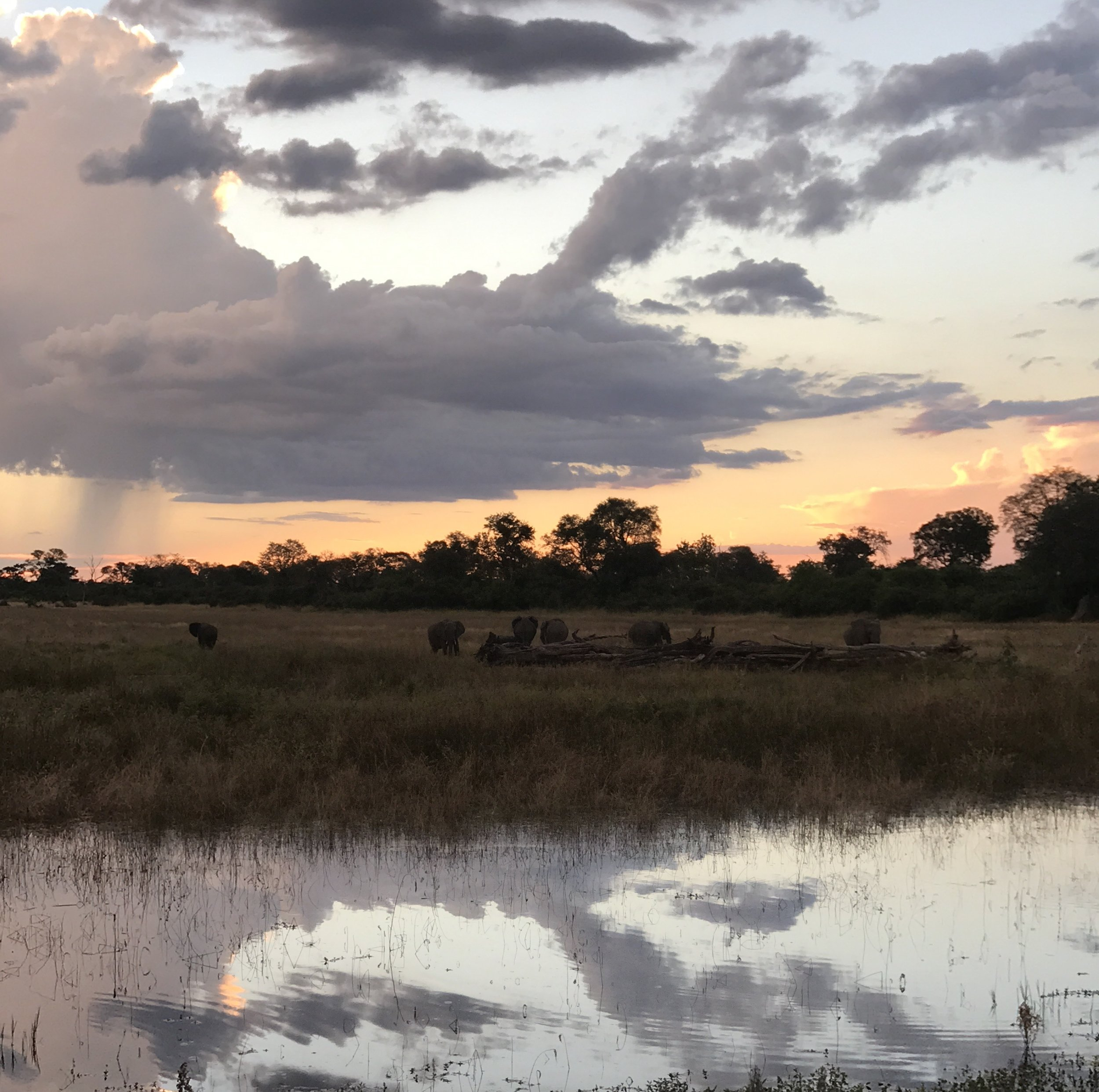 - When we arrived at Zavuti, the welcoming committee was out in full force, we enjoyed a sundowner on the deck surrounded by a herd of elephants!Monday night is Boma night in the camp. The local word boma means 'gathering' but originates from the the acronym for British Officers Mess Area, which the local tribes adopted as their own many years ago. For us, it meant a group dinner around the fire pit, lots of incredible local cuisine, traditional song & dance and more drink than you know what to do with, those Batswana's sure know how to party!