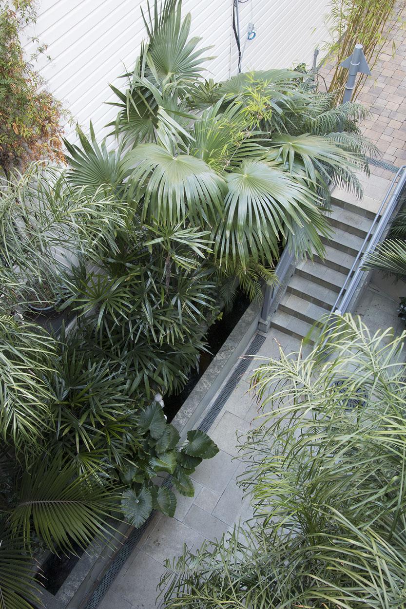Debra's Vertical Garden_6021.jpg