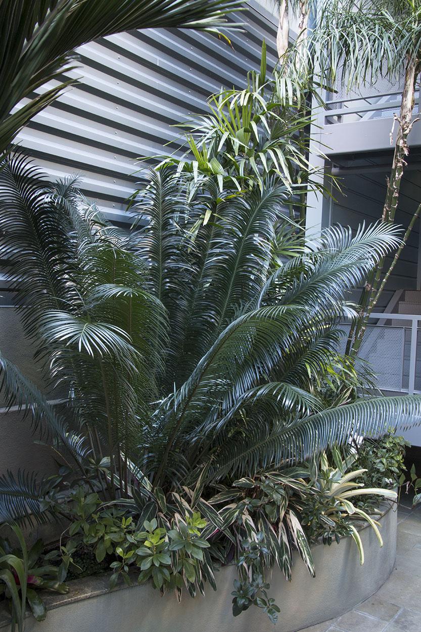 Debra's Vertical Garden_6027.jpg
