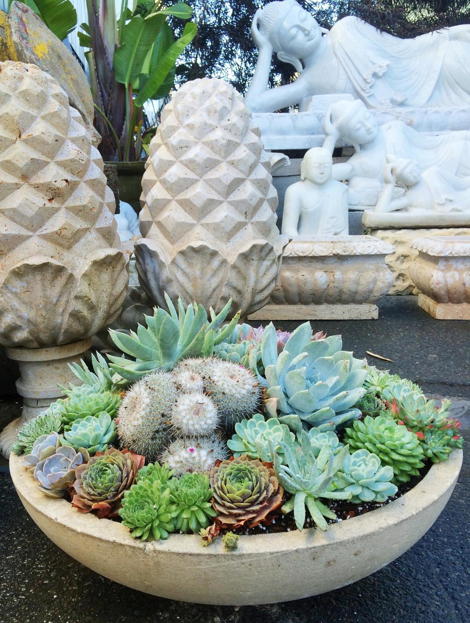 succulents+.jpg