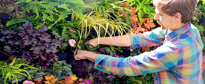 Plant Maintenance - Keep all your spaces green