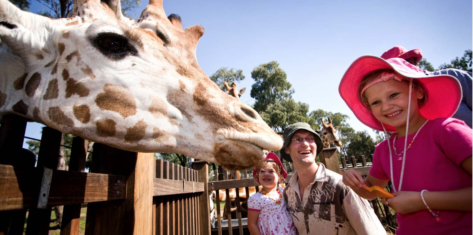 FAMILY FLY, STAY, ZOO - Quality Inn Dubbo 2 nights accommodation (2 adults + 2 children), return airfares, daily breakfast and 2 day Taronga Western Plains Zoo Passex Newcastle or Canberra                               Starting from $454 pp/twin share (adult), $198 (child under 15)★★★★