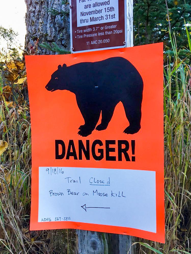 Brown Bear on Moose Kill.jpg
