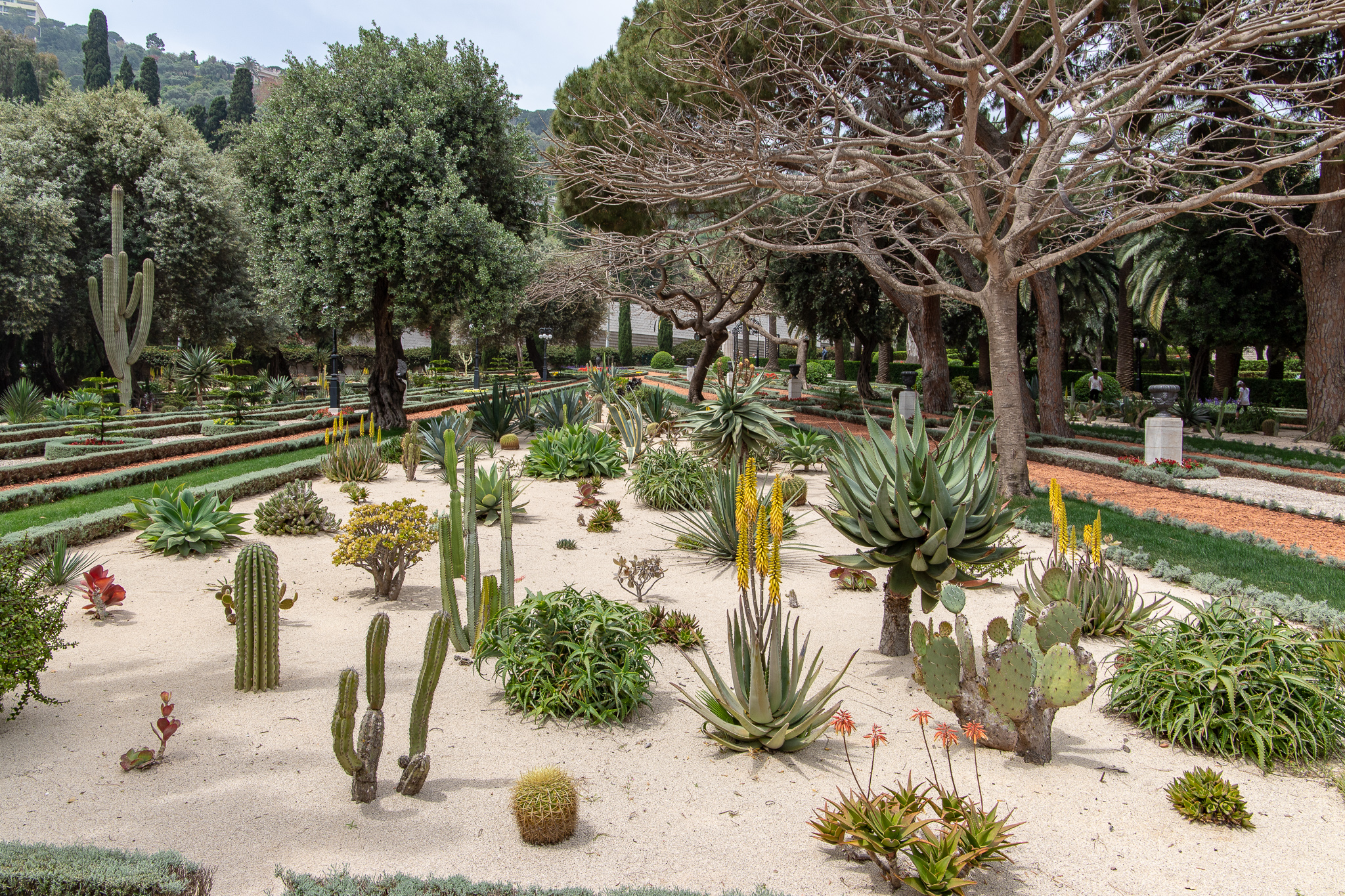 And cactuses - this place has it all