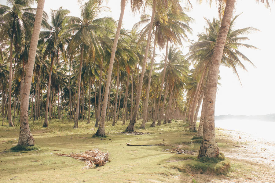 swaying coconut trees on a green mossy beach next to a body of shallow sea water