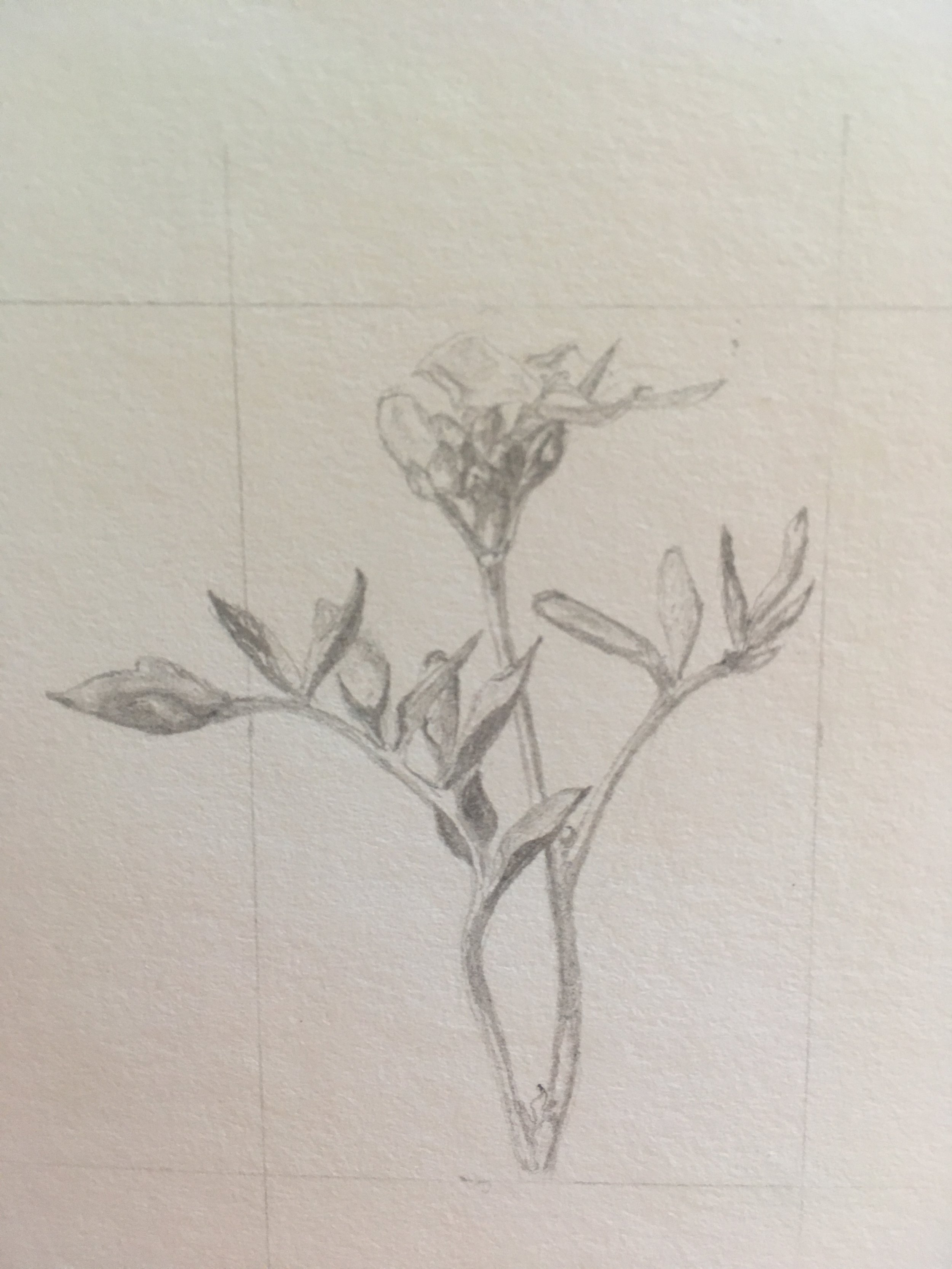 Translating flowers into scientific documents   I'm making botanical field sketches, and measured drawings of the flora that's popping up....