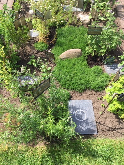 Translating a plot of land into a herbal pharmacy   During 2018-19, as part of my studies towards a  Diploma in Herbology , I had the privilege of curating and tending a small area within the  Royal Botanic Gardens in Edinburgh . I used the space to raise awareness of the health detriments of excessive use of digital devices. The project had its own outreach Twitter account, @GardenUnplugged.  From the plants grown on my little plot, I developed a number of herbal products to alleviate the symptoms of ' Electronic Screen Syndrome '.  Although the space has now passed to the new first year students, I continue with my studies, and also my ethnobotany practice. The Twitter account has now been replaced by the ' Ethnobotany ' blog on this website.