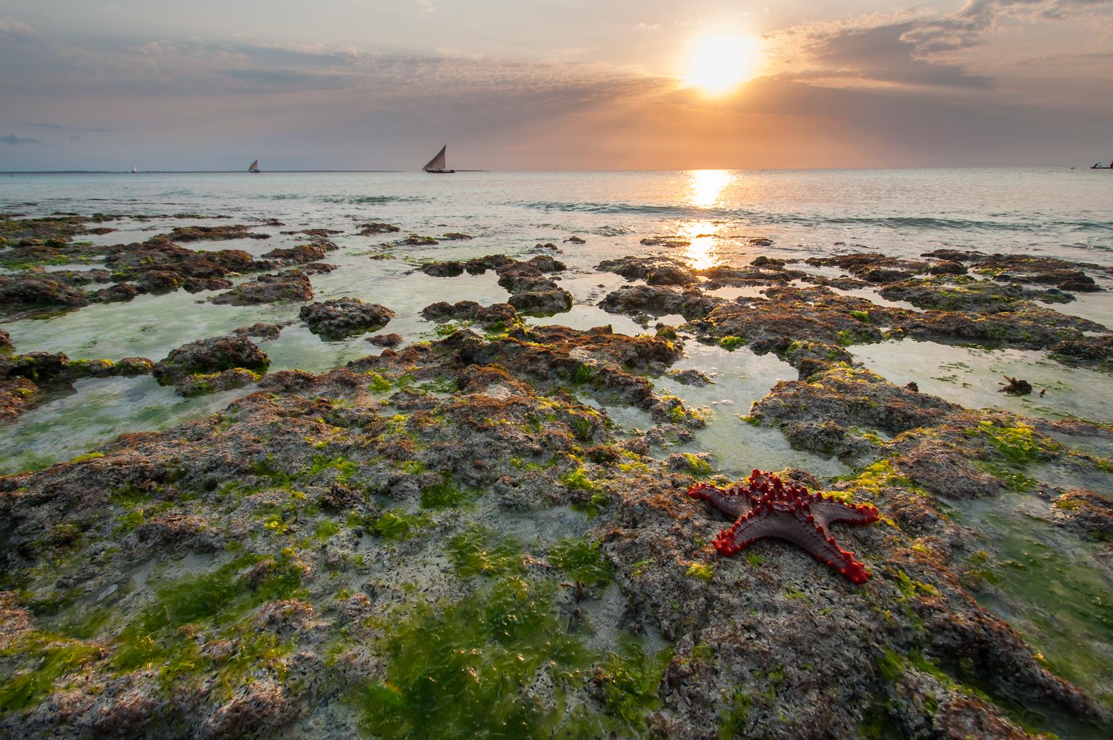 Starfish-Tide.jpg